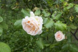 flores jardin centro discapacitados rga granada
